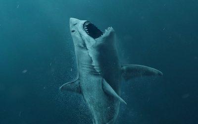 Imagine você imerso em um tanque com 2 tubarões…